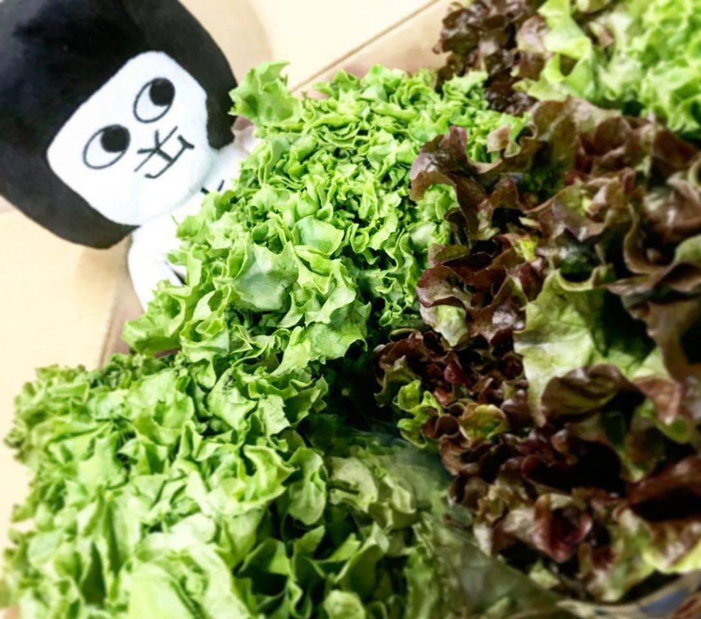 新鮮な野菜♡
