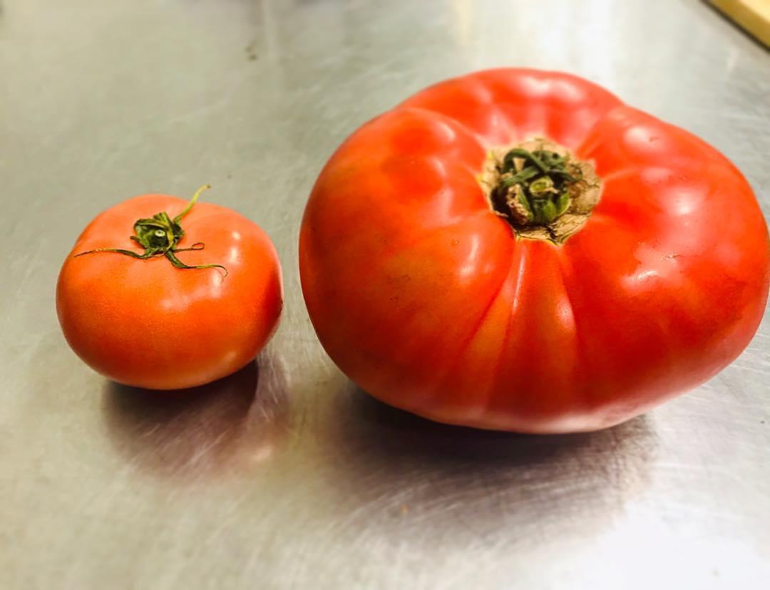 大きなトマト!!