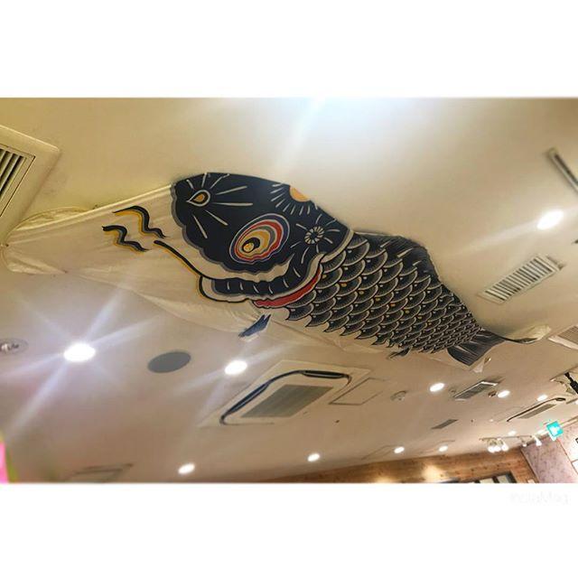 大きい鯉のぼり!