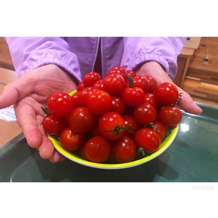 ミニトマト!